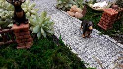Mini Dachshund (Salsicha)